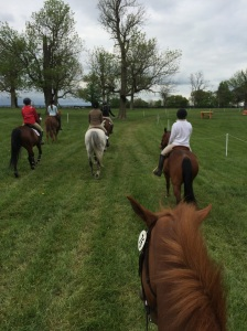 Miami horses enjoying a hack on the cross country field.